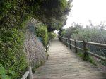 Boulders Beach walkway